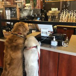 Uptown Coffee's favorite customers