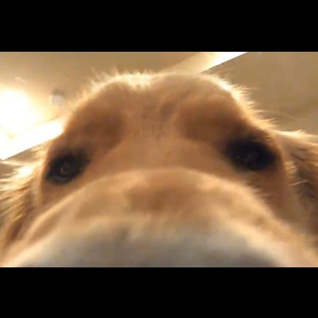 FaceTime with Rory 🌙