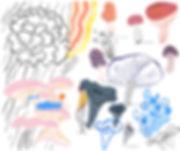 1_241mushroom-collage-edible-rebeccaclar
