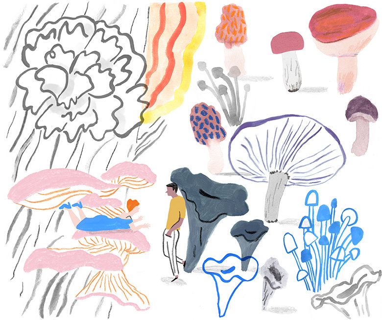 1_241mushroom-collage-edible-rebeccaclar