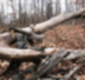 trail-cam-in-branches_orig.jpg