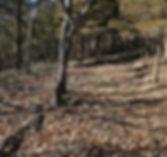 olymbros-t3-off-trail-1_orig.jpg