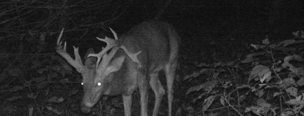 Drop Tine Night Buck Picture.jpg