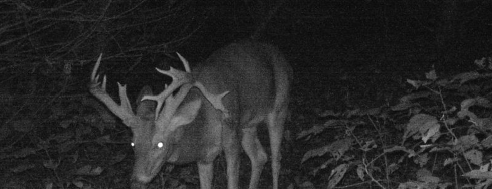 Drop Tine Night Buck Picture.png