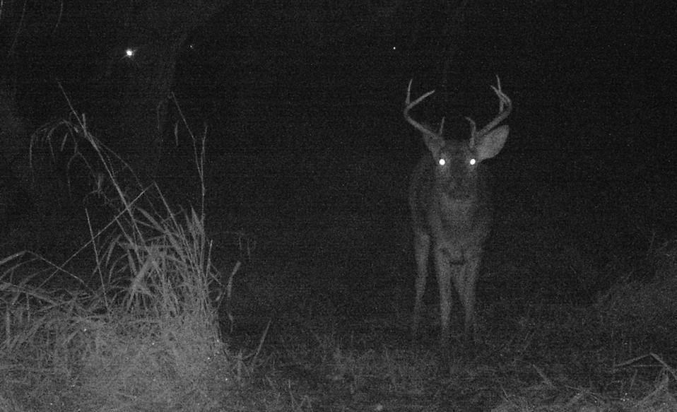 Buck 3.JPG