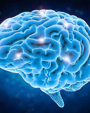 Brain  photo.jpg