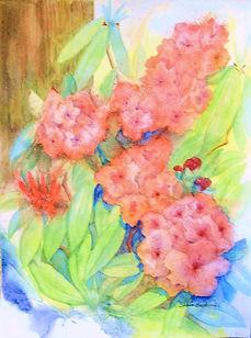 pink rhodies 5 IMG0001 (2).jpg