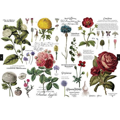 Vintage Botanical Transfer