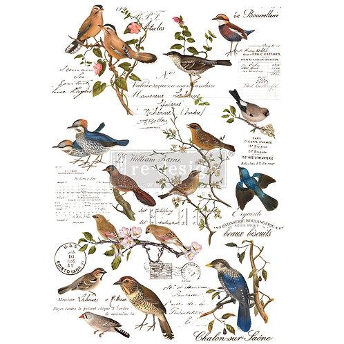 Postal Birds Transfer