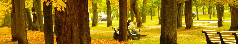 Canva - Amazing, Fall, Colorful, Colors,