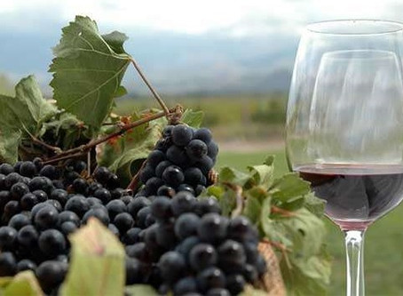 THE STORY OF CARMÉNÈRE IN CHILE