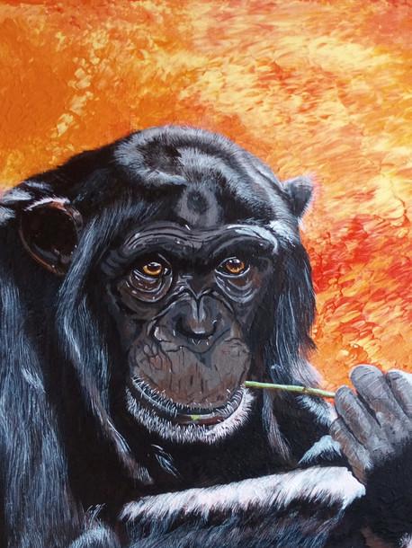 Chimpanzee £150