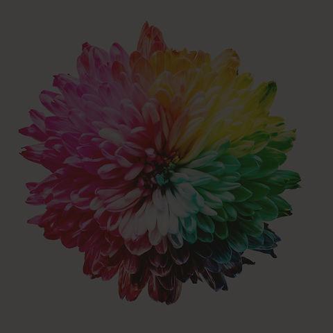 multicolored%20flower%20illustration_edited.jpg