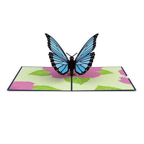 Love Pop - Blue Morpho Butterfly Card