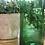 קנקן זכוכית ממוחזרת בצבע ירוק ליד עציץ