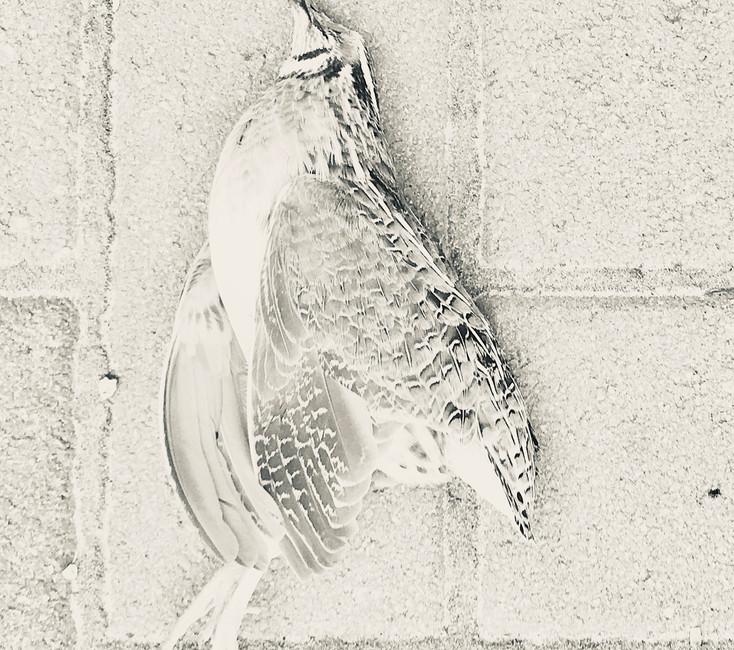 Unknown Bird #2