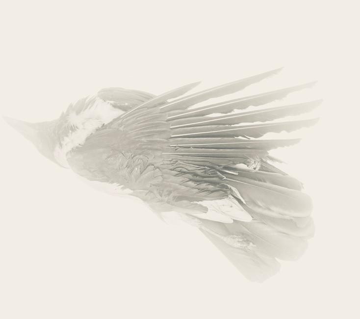 Unknown Bird #1