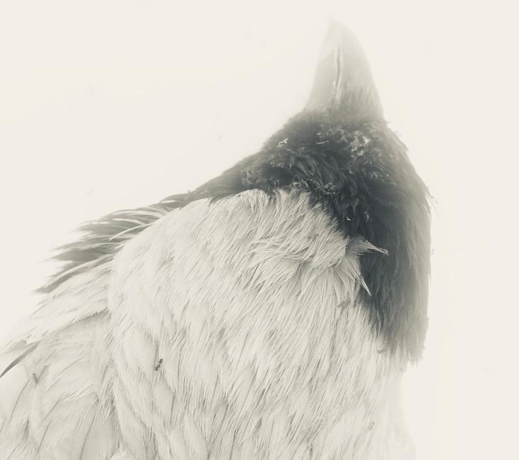 Unknown Bird -head