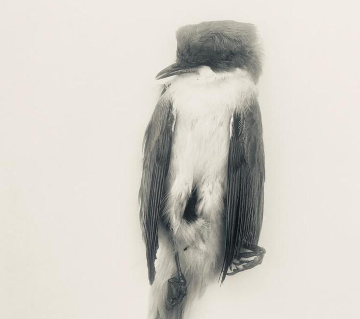 Unknown Bird #3