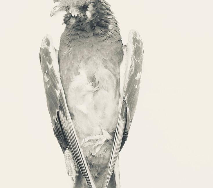 The bird's lament