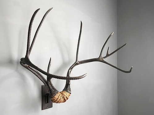 "Mule Deer rack  32"" wide, life size"