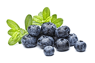 Bluberry Extract