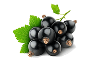 Blackcurrant Seed