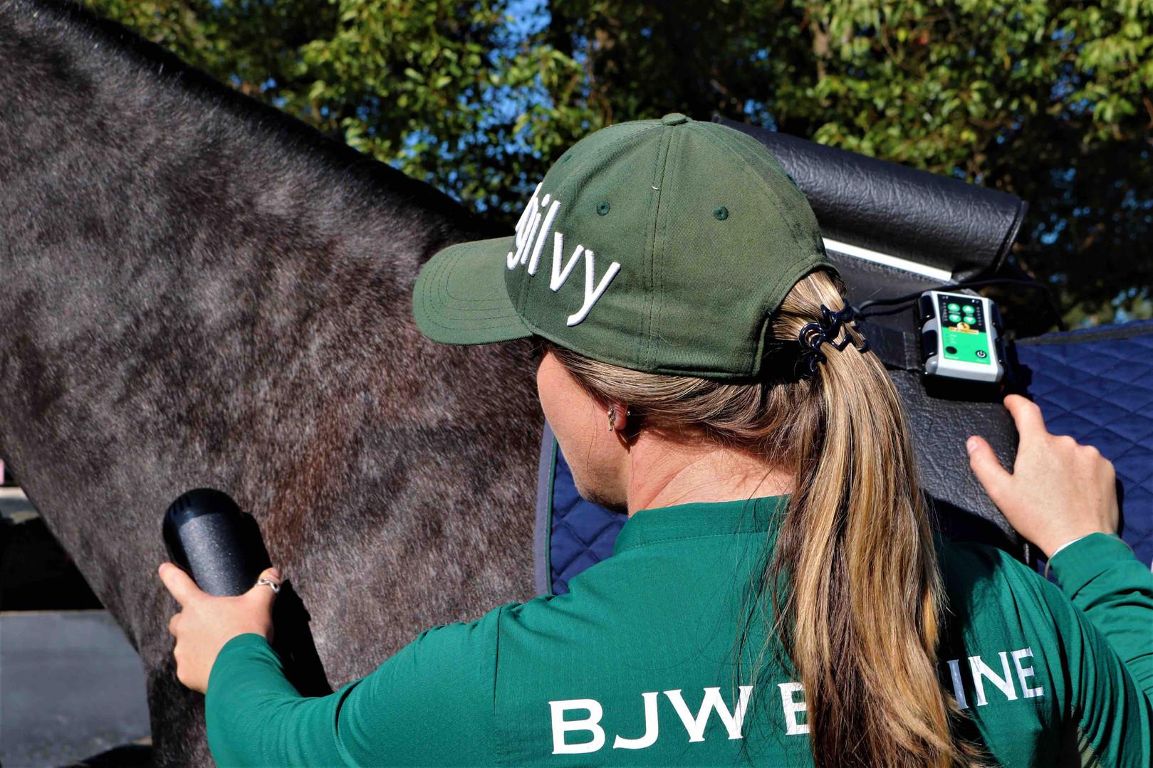 BJW Equine Equissage neck.jpg