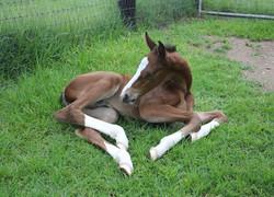 Cera Charisma as newborn