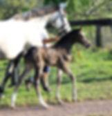 Quintera foal 6.jpg