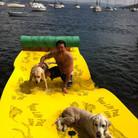 Aqua Lily Pad dogs.JPG