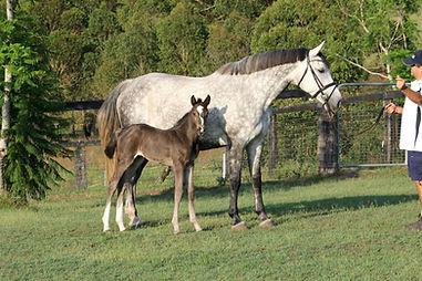 Quintera foal.jpg