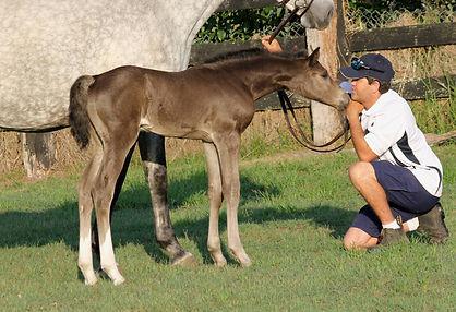Quintera foal 4.jpg