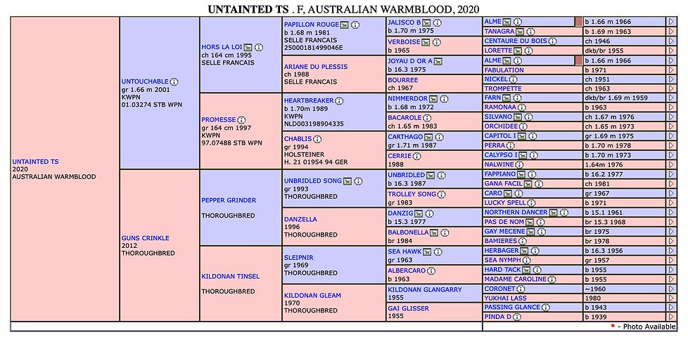 Untainted TS pedigree