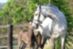 Quintera foal 5.jpg