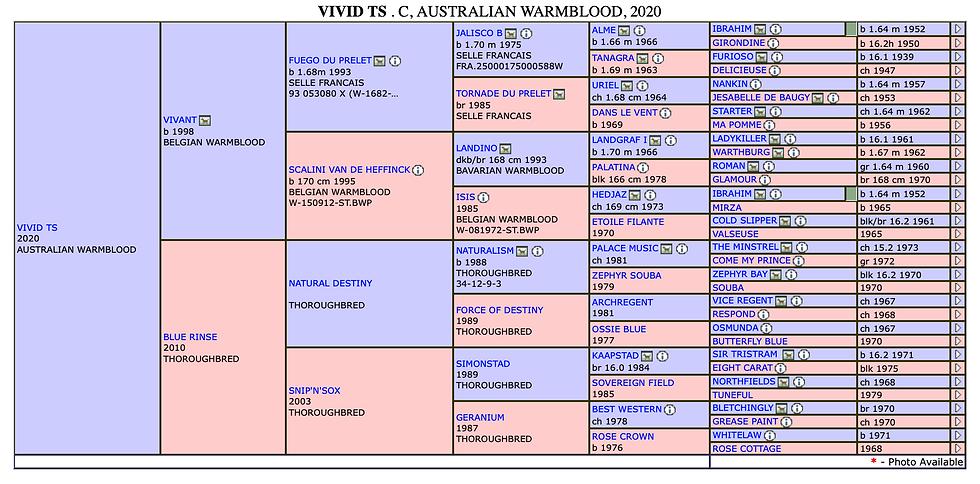 Vivid TS pedigree