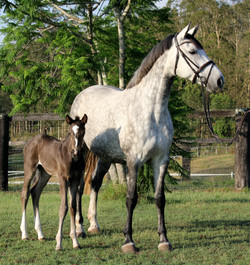 Beate and Quintero filly