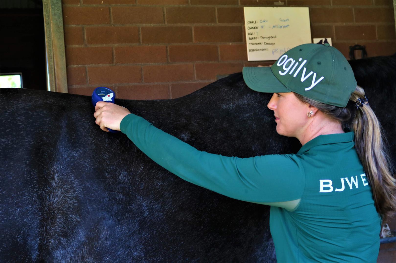BJW Equine Laser Treatment back.jpg