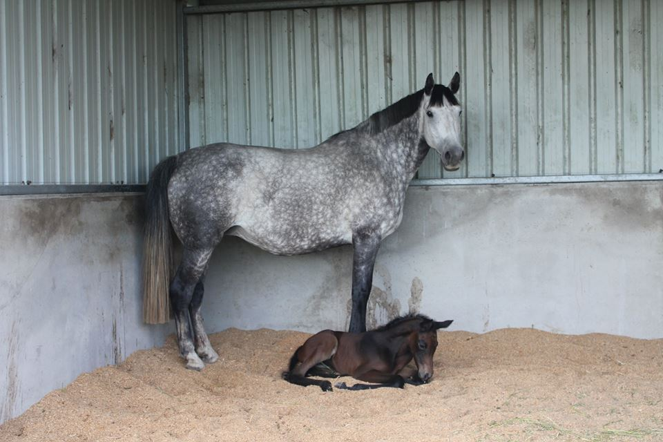 Beate and her Clearway filly