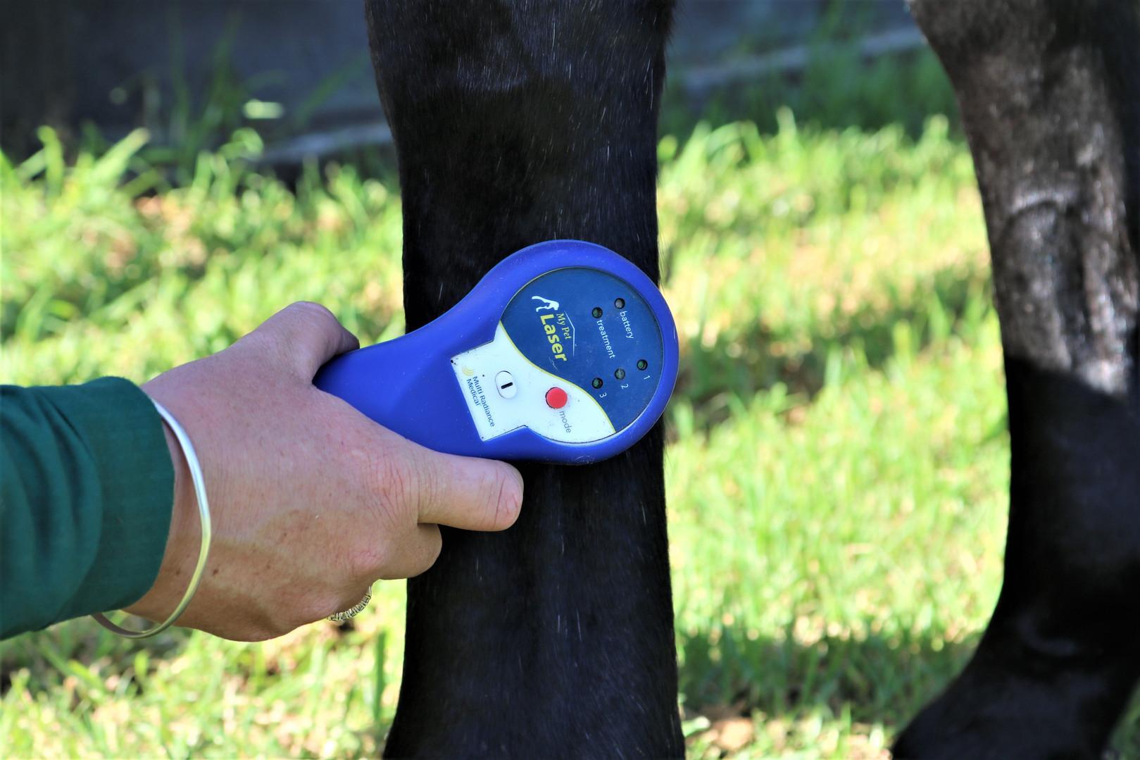 BJW Equine Laser Treatment.jpg