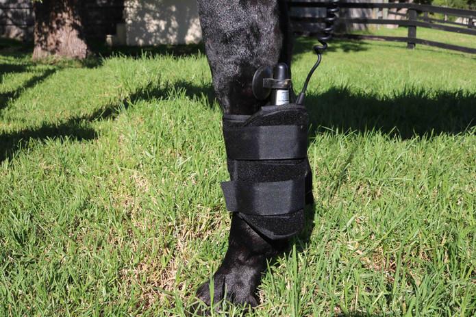 BJW Equine Equissage leg.jpg
