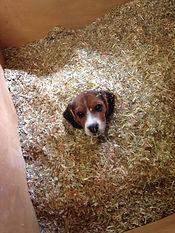 Dog in sawdust.jpg