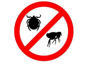 Flea and Tick Prevention Danger