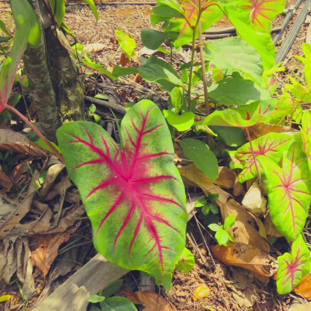 Jardin Tropical.m