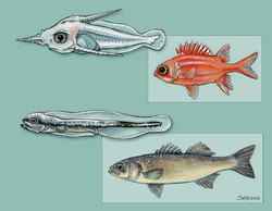 Larvel fish