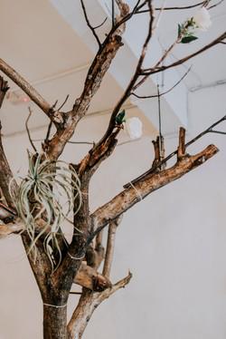 Treemonk 20.jpg