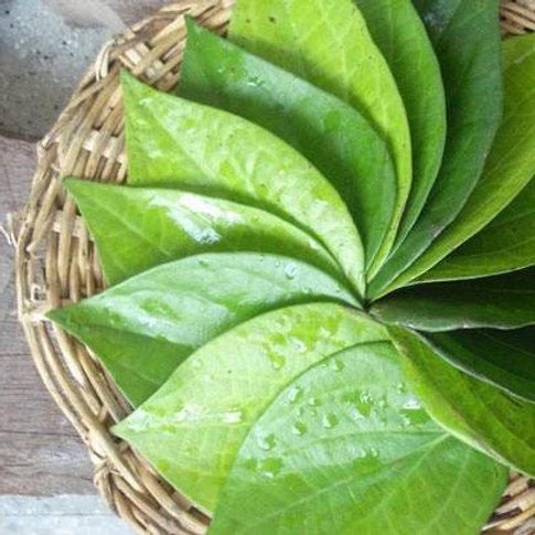 Paan Leaf