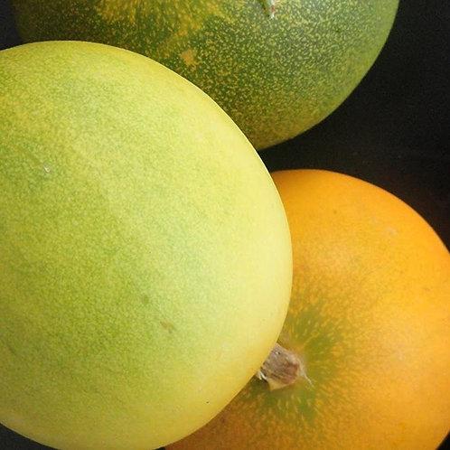 Dosakai Melon