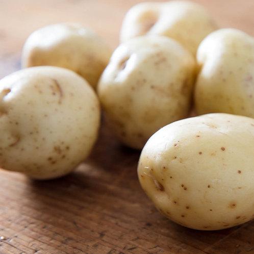 White Potato