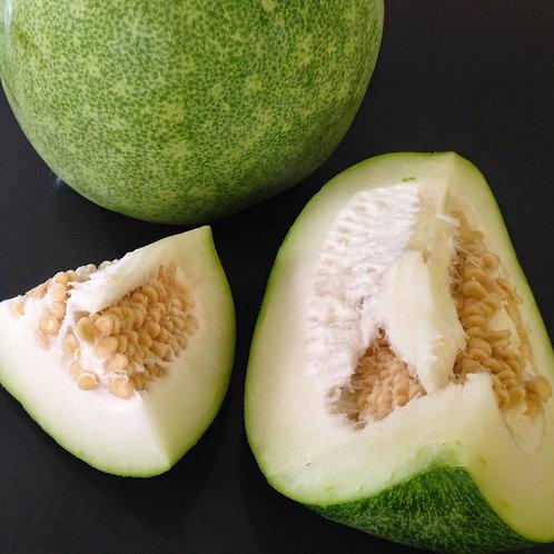 Ash Gourd (White Pumpkin)